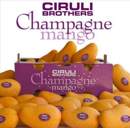 champ_mango_Web_logo